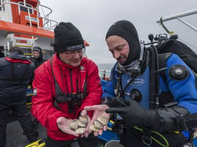 Heriot-Watt scientists aim to restore oyster population